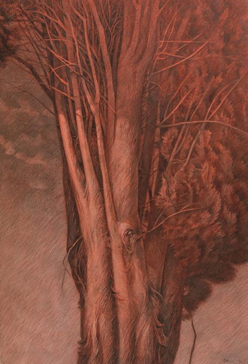 dugo_alberi_002