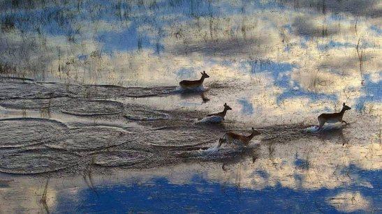 Dog Lake -cerbiatti  cielo e migrazioni