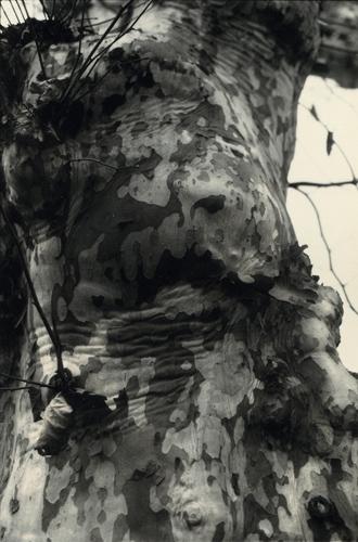 paola mongelli-anima e corpo-06