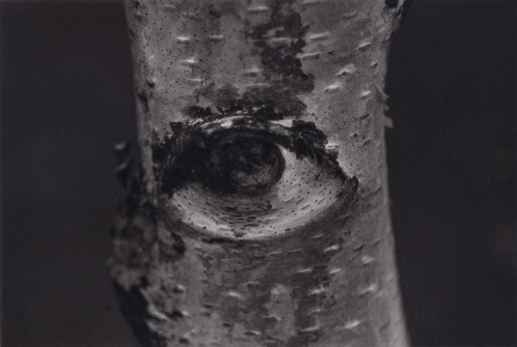 paola mongelli-occhi-01