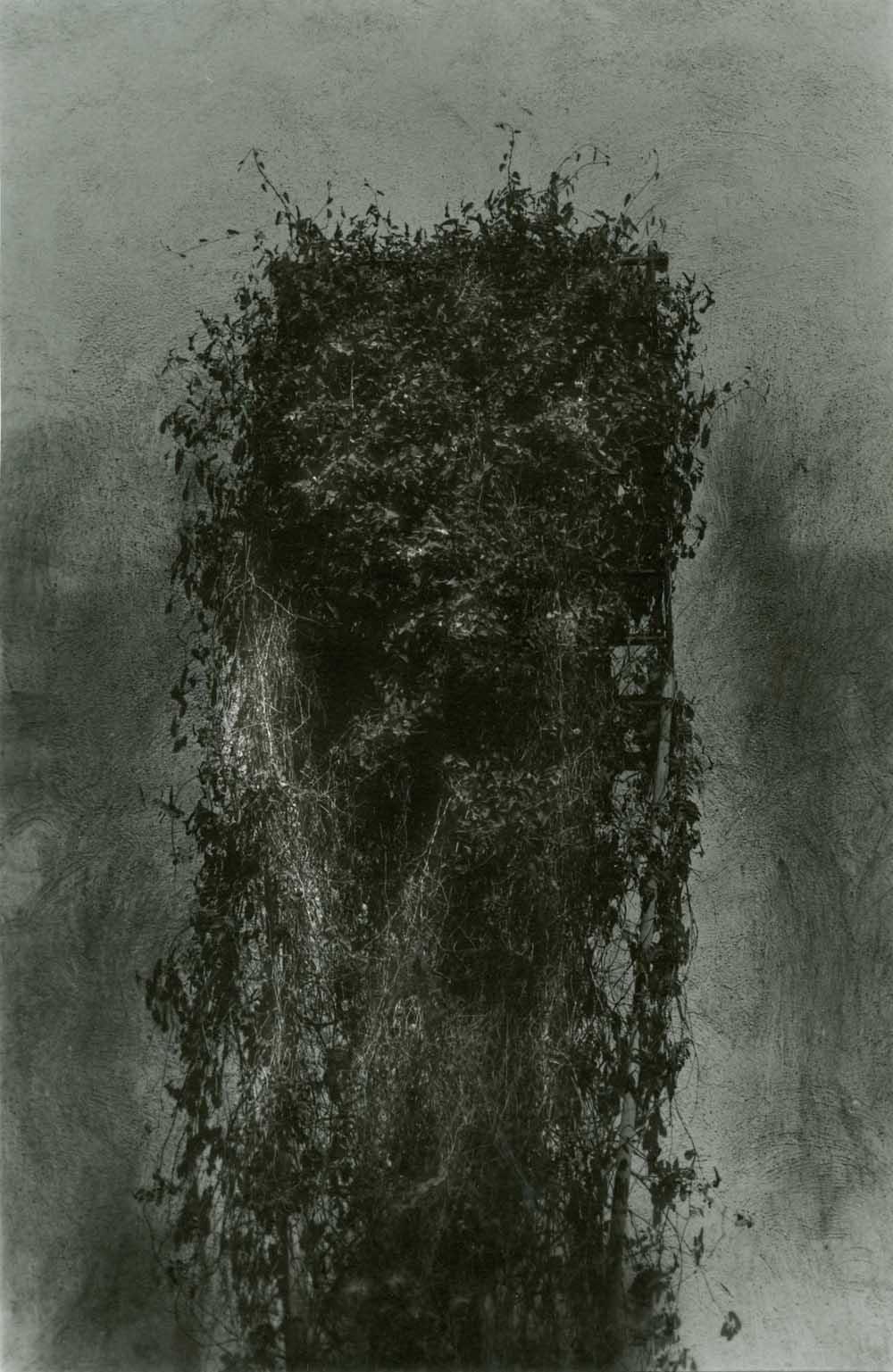 paola mongelli-rampicanti-07-1