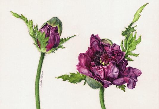 Eunike Nugroho -flower-