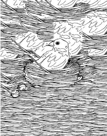 giulia incani- disegni bianco e nero