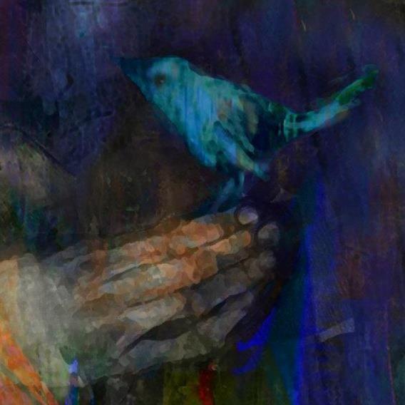 suhair-sibai-blue-bird-1349560775_b