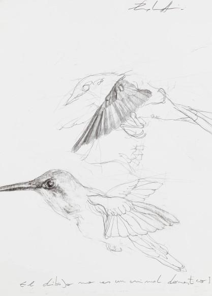 martin palottini uccelli1