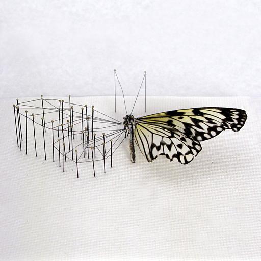 03-vlinderkast-01-- Anne Ten Donkelaar