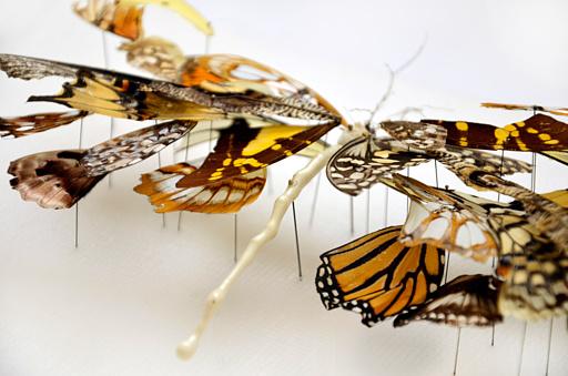broken butterfly african-queen_02
