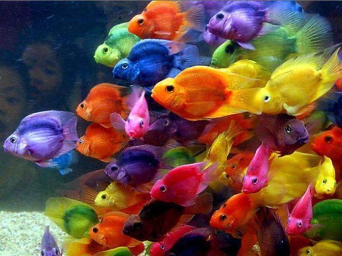 Brigitta Neumann- rainbow fishes