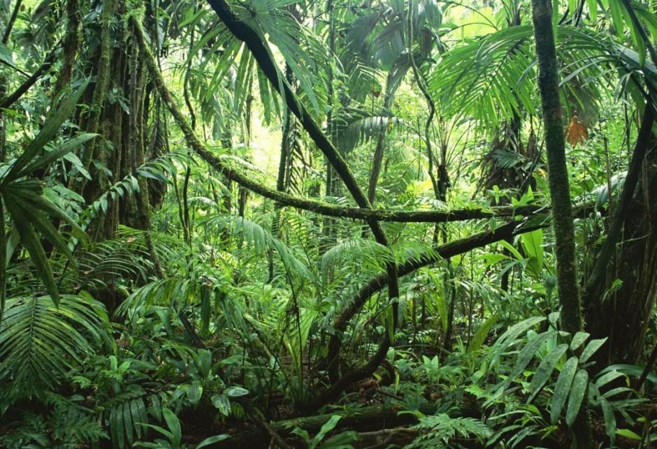 Alberi-piante-foresta-costa.Rica_-1070x732