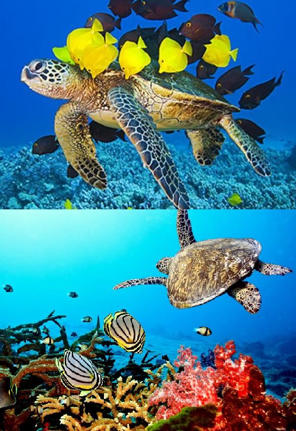 tartaruga fine