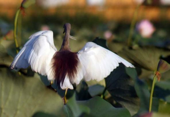 MIGRANT-BIRDS-8