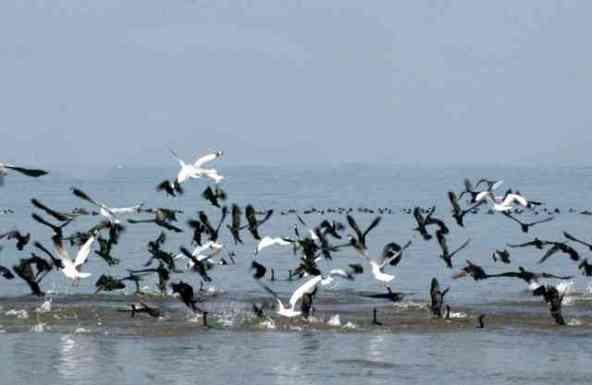 migratory-birds-1