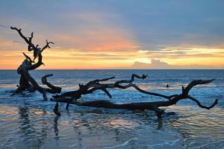 jekyll island- sunrise-at-driftwood-beach-14-bruce-gourley