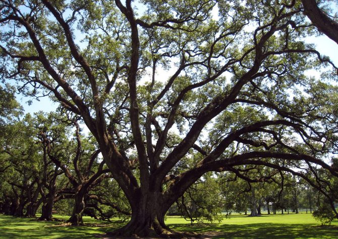 louisiana_oak_alley_plantation_14