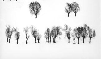 abbas-trees-in-snow