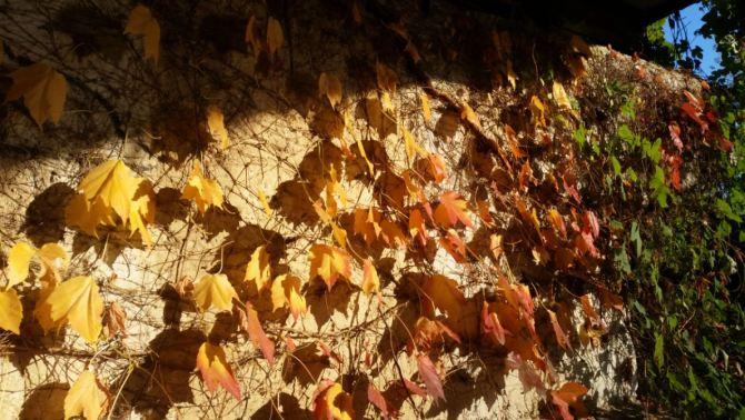 muro-con-foglie-e-luce