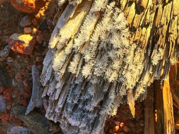 geninne-it-was-frosty